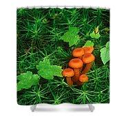 Wax Cap Fungi Shower Curtain