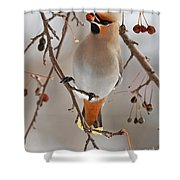 Waxing Eating Shower Curtain
