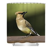 Waxwing At The Park Shower Curtain