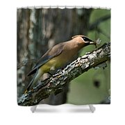 Waxwing Lunchtime Shower Curtain