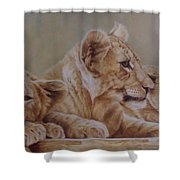 We Three Will Be Kings... Shower Curtain