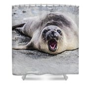Weaner Calling Shower Curtain