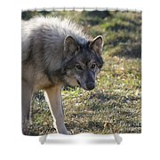 Weary Stance Shower Curtain
