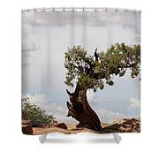 Weatherbeaten Juniper Shower Curtain