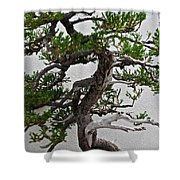 Weathered Bonsai Shower Curtain