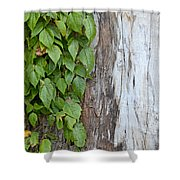 Weathered Tree Trunk With Vines Shower Curtain