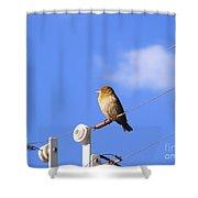 A Gazing Weaver Shower Curtain