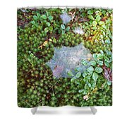 Web In Moss Shower Curtain