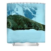 Weddell Seal Shower Curtain