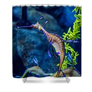 Weedy Seadragon Shower Curtain