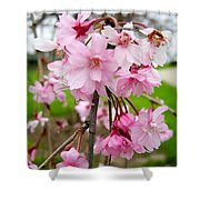 Weeping Cherry Blossoms Shower Curtain