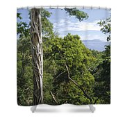 Weeping Fig And Host Natu Tree Sulawesi Shower Curtain