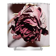 Weeping Rose Shower Curtain