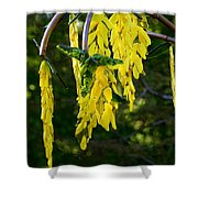 Weeping Tree Shower Curtain