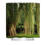 Weeping Willow Shower Curtain