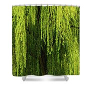 Weeping Willow Tree Enchantment  Shower Curtain