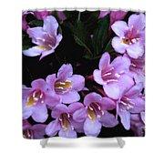 Weigela Blossoms Shower Curtain