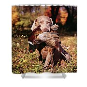 Weimaraner Hunting Dog Retrieving Ring Shower Curtain