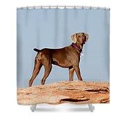 Weimaraner IIi - Lake Powell Shower Curtain