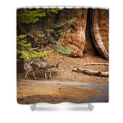 Welcome Home - Sequoia National Forest Shower Curtain