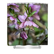 Welcome Spring Flowers Shower Curtain