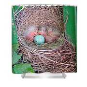 Welcome To The World - Hatching Baby Robin Shower Curtain