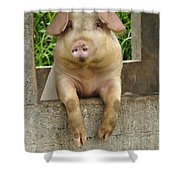 Well Hello There Shower Curtain by Bob Christopher