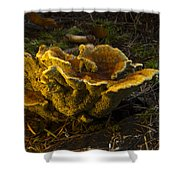 Well Lit Fungi Shower Curtain