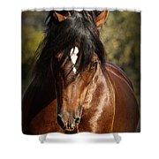 Welsh Cob Stallion Shower Curtain