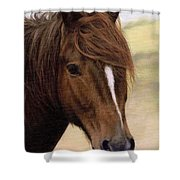 Welsh Pony Painting Shower Curtain