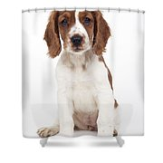 Welsh Springer Spaniel Dog Shower Curtain