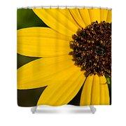 West Coast Dune Sunflower Shower Curtain