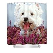 West Highland Terrier Dog In Heather Shower Curtain