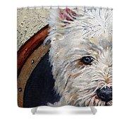 West Highland Terrier Dog Portrait Shower Curtain