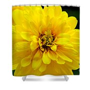 West Virginia Marigold Shower Curtain