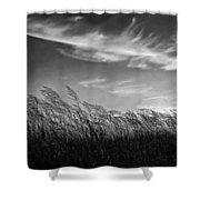 West Wind Bw Shower Curtain