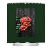 Westerland Rose Wood Fence Shower Curtain