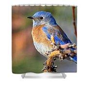 Western Bluebird Profile Shower Curtain