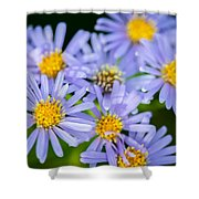 Western Daisies Asters Glacier National Park Shower Curtain