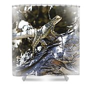 Western Fence Lizard Aka Blue-belly Lizard Shower Curtain