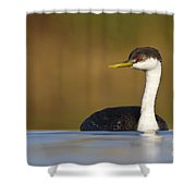 Western Grebe On The Lake Shower Curtain