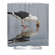 Western Gull Eats Clam Shower Curtain