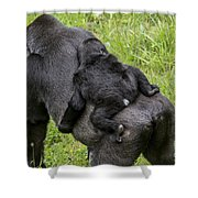 Western Lowland Gorilla 1 Shower Curtain