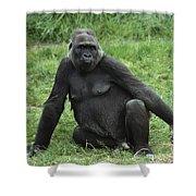 Western Lowland Gorilla Female Shower Curtain