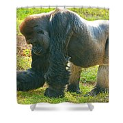 Western Lowland Gorilla Male Shower Curtain