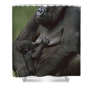 Western Lowland Gorilla Nursing Infant Shower Curtain