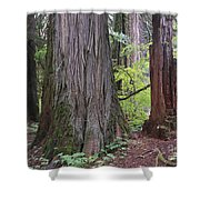 Western Red Cedar Grove Shower Curtain