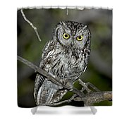 Western Screech Owl Shower Curtain