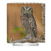 Western Screech Owl Juvenile Utah Shower Curtain
