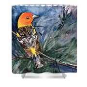 Western Tanager At Mt. Falcon Park Shower Curtain